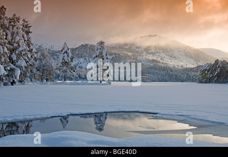 Heavy Winter snowfall at Loch an Eilean in the Cairngorms National Park Aviemore  SCO 5747 - Stock Photo