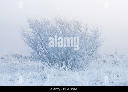 Lonely tree isolated by fog on a cold winter morning - Stock Photo