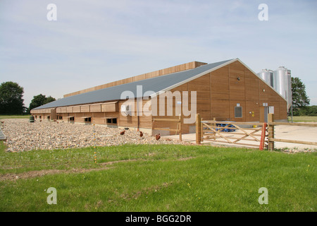 Free Range Barn Feed Hens For Egg Production - Stock Photo
