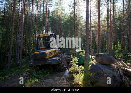 Yellow Ponsse Elk forest harvester / forwarder in the young Finnish pine ( pinus sylvestris ) forest , Finland - Stock Photo