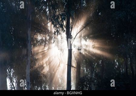Sunburst through trees in India, Silhouette - Stock Photo