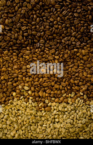 View at coffee beans at different roasting stages, Coffee plantation, Langila, Highlands, Papua New Guinea, Oceania - Stock Photo