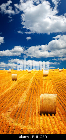 Agricultural landscape of hay bales in a golden field - Stock Photo