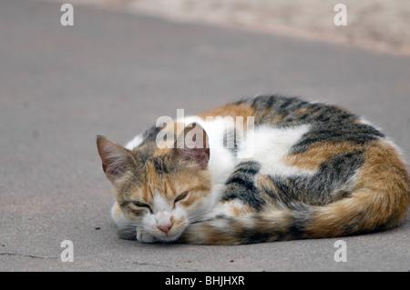 Cat sleeping in the street - Stock Photo