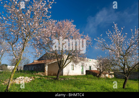 Portugal, the Algarve, almond blossom in the countryside with an old farmhouse, near Albufeira - Stock Photo