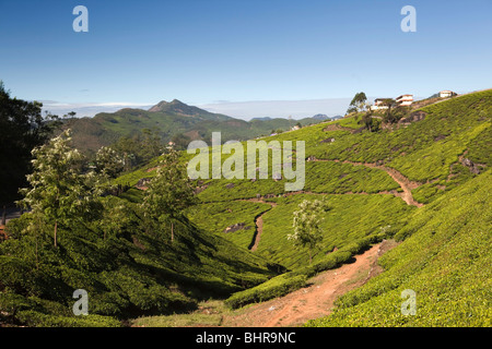 India, Kerala, Munnar, path through highland tea plantation - Stock Photo