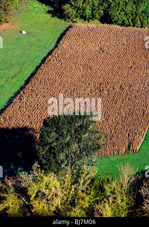 Maize field, view from Domme; Dordogne; South West France; Europe - Stock Photo