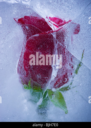 red rose frozen in a block of ice - Stock Photo
