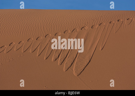 Animal tracks in sand, Erg Chebbi, Sahara Desert, Morocco - Stock Photo