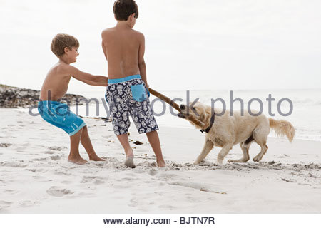 Brothers and dog on a beach - Stock Photo