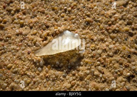 Silica glass fragments on the desert floor in an interdunal corridor of The Great Sand Sea, North of Gilf Kebir - Stock Photo
