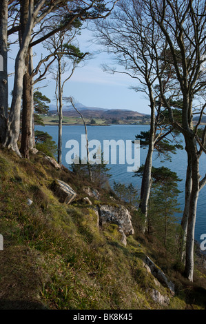 View from a headland in the town of Portree, Isle of Skye, Scotland with silver birch trees in spring - Stock Photo