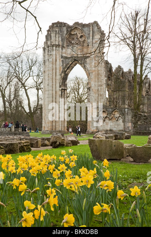 Spring daffodils at the ruins of St Mary's Abbey, York Museum Gardens in the centre of York City, Yorkshire, Uk - Stock Photo