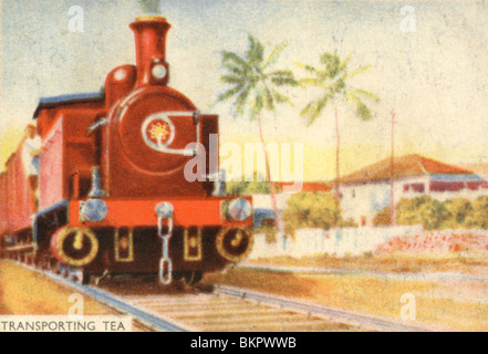 Transporting Tea by Train from the Plantation - Stock Photo