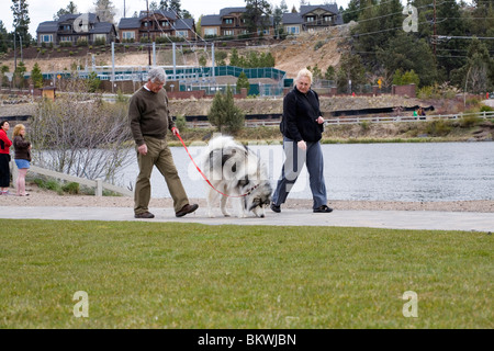 A senior citizen couple walk their large dog in a city park - Stock Photo