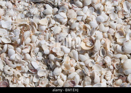 Beach covered in shells, Captiva Island, Gulf Coast, Florida, United States of America, North America - Stock Photo