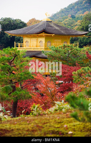 Autumn colour leaves, Golden Temple, Kinkaku ji (Kinkakuji), dating from 1397, Kyoto, Japan, Asia - Stock Photo