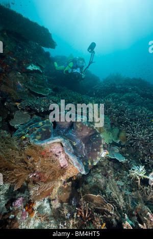 Photographer over Great Clam, Tridacna squamosa, Raja Ampat, West Papua, Indonesia - Stock Photo