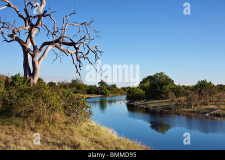 The newly flooded Savuti Channel in Northern Botswana. - Stock Photo