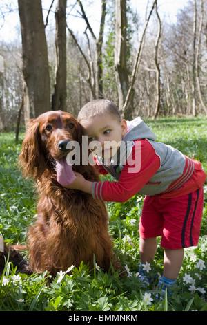 little boy playing with irish setter dog - Stock Photo