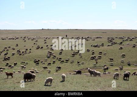 Shepherd, David Gareja monastery complex, Georgia, Azerbaijan border - Stock Photo