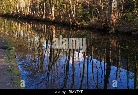 Trees reflected in the water of  Cromford Canal in the Derbyshire Dales part of the Peak District England UK - Stock Photo