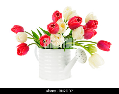 Bouquet of red and white tulips isolated on white background - Stock Photo