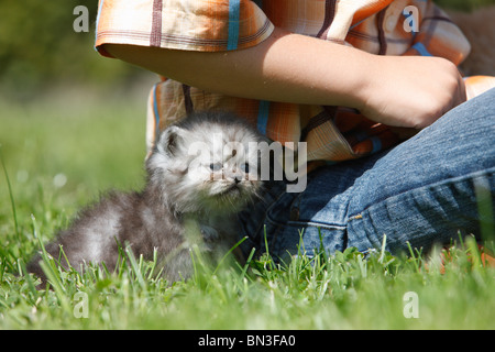 domestic cat, house cat, Persian (Felis silvestris f. catus), boy sitting in a meadow with a 4 weeks old kitten - Stock Photo