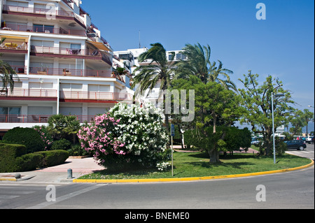 Holiday Apartments and Homes with Palm Trees and Oleander Bushes in Empuriabrava Costa Brava Catalonia Spain Espana - Stock Photo