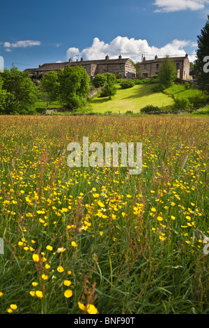 Wild Flower Meadow below Worton village, Wensleydale in the Yorkshire Dales. - Stock Photo