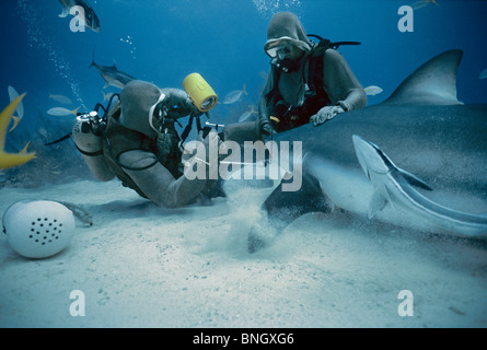 Photographer photographing eye of Caribbean Reef Shark (Carcharhinus perezi), Bahamas - Caribbean Sea. - Stock Photo
