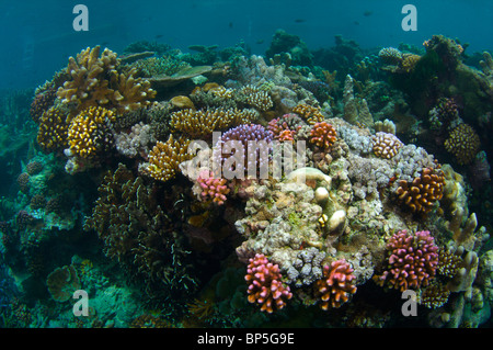 Yap Micronesia diving - Stock Photo