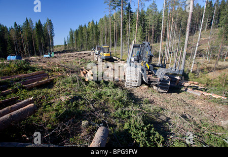 Ponsse Buffalo forwarder and Beaver forest harvester at clear cutting area , containing mainly pines and spruces - Stock Photo