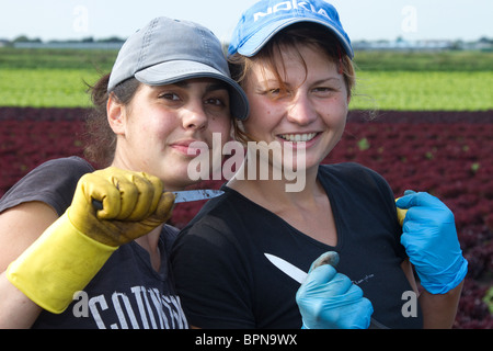 Bulgarian Immigrant Workers holding cutting knives _ Labouring on Vegetable Market Gardens, Mere Brow, Southport, - Stock Photo