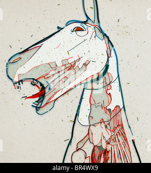 A drawing of a horses head with a view of muscle, tendons and bones - Stock Photo