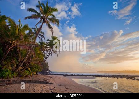 Kauai, HI Sunrise clouds and overhanging palm trees on Hanalei Bay near Makahoa point - Stock Photo