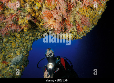 Diver looking at red coral (corallium rubrum), Nereo cave, Alghero, Sardinia, Italy. Note that some has the white - Stock Photo