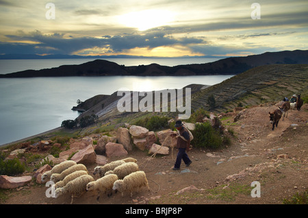a farmer with his sheep on the Isla del Sol, Lake Titicaca, Bolivia - Stock Photo