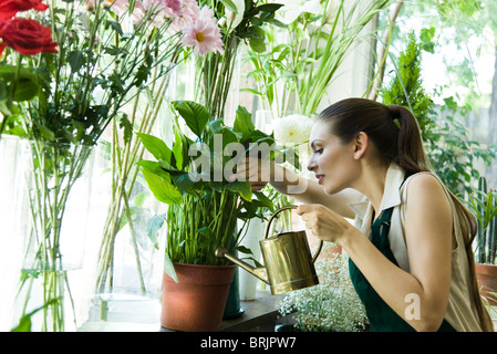 Female florist watering plant - Stock Photo