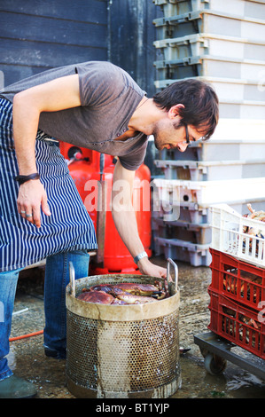 kitchen hand putting freshly caught crabs in bucket ready for steaming - Stock Photo
