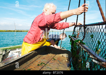 Oyster Fisherman catching Colchester Natives in West Mersea, uk - Stock Photo