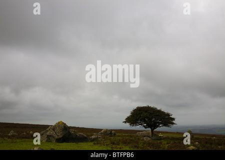 Lone tree on Dartmoor, Britain - Stock Photo