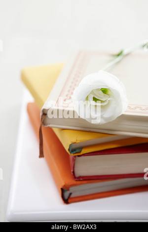 books and rose - Stock Photo