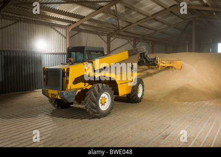 Forklift truck shoveling grain in store - Stock Photo