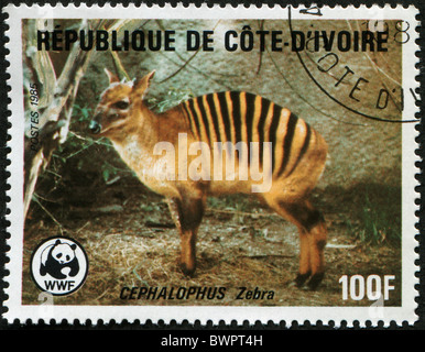 COTE D'IVOIRE - CIRCA 1985: A stamp printed in Republic Cote d'Ivoire shows Zebra Duiker -Cephalophus Zebra, circa - Stock Photo