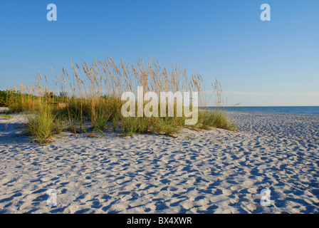 Clump of Sea Oats on Sanbiel Island, FL , USA - Stock Photo