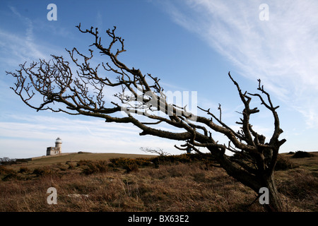 Windswept tree and Belle Tout lighthouse on Beachy Head - Stock Photo