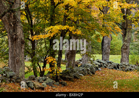 Old Broken Down Stone Wall and Autumn Color on New England Farm in Windham County, Vermont - Stock Photo