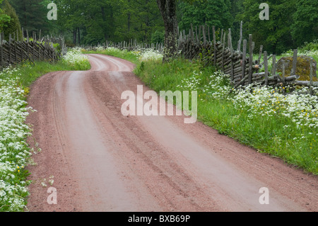 Dirt road through woods in summer - Stock Photo