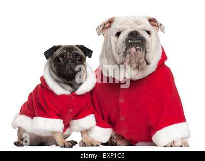 English Bulldog, 4 years old, and Pug, 2 years old, wearing Santa outfits in front of white background - Stock Photo